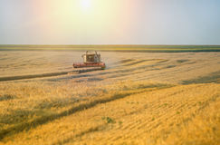 Combine harvester working Royalty Free Stock Photo