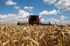 Combine harvester working on a wheat field Royalty Free Stock Photo