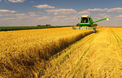 Combine harvester working on the wheat field stock image