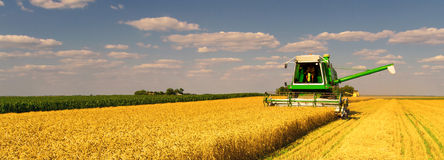 Combine harvester working on the wheat field stock photo