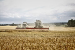 Combine harvesters at corn royalty free stock image