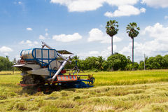 Combine harvesters were reaping Stock Photo