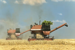 Combine harvesters at work Royalty Free Stock Image