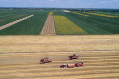 Combine harvesters working in golden wheat field Royalty Free Stock Photography