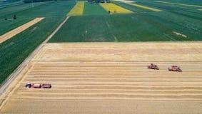 Combine harvesters working in golden wheat field Stock Photo