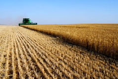 Combine harvesting royalty free stock images
