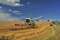 Combine harvesting. A combine harvester harvests wheat under a British summer sky. Space for text in the sky Royalty Free Stock Photos