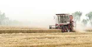 Combine harvesting cereals field, China Stock Images