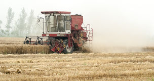 Combine harvesting cereals field, China. Harvesting machine combine working at wheat or rye grain crop field in a traditional way, China Stock Image