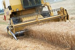 Combine harvesting cereals field Royalty Free Stock Photo