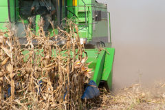 Combine harvesting corn. A farmer combines a field of corn Royalty Free Stock Photos