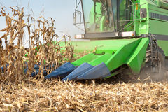 Combine harvesting corn Stock Photos