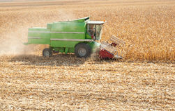 Combine harvesting corn. A farmer combines a field of corn Royalty Free Stock Images