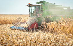 Combine harvesting corn. A farmer combines a field of corn Stock Photography