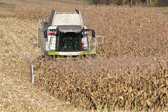 Combine harvesting a corn crop. In the field Stock Images