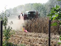 Combine harvesting corn crop in the cultivated field.  Royalty Free Stock Images