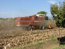Combine harvesting corn crop in the cultivated field.  Stock Image