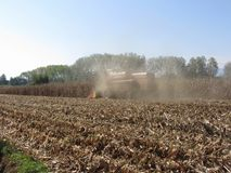 Combine harvesting corn crop in the cultivated field.  Royalty Free Stock Photography