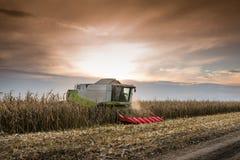 Combine harvesting corn. Combine harvesting crop corn grain fields Royalty Free Stock Images