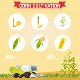 Combine for harvesting corn in the field. Infographics the growing corn. Growth stages from seed to adult plant. Combine for harvesting corn in the field Stock Images