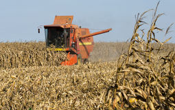Combine harvesting corn. Combine harvester harvesting corn in field Royalty Free Stock Images