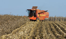 Combine harvesting corn Royalty Free Stock Image