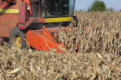 Combine harvesting corn Royalty Free Stock Photos