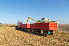 Combine harvesting corn and unloading grains in to tractor trailer Stock Images