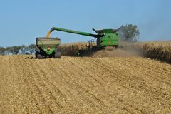 Combine harvesting corn. And unloading to trailer Stock Image