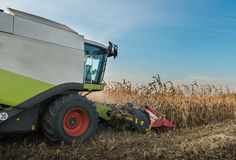 Combine harvesting crop corn Stock Image