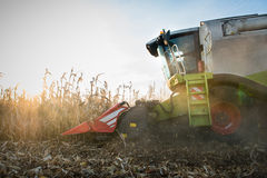 Combine harvesting crop corn Royalty Free Stock Photos
