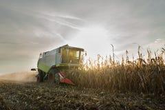 Combine harvesting crop corn. Grain fields Stock Photos