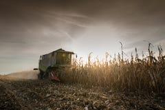 Combine harvesting crop corn. Grain fields Stock Images