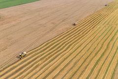 Combine Harvesting a Fall Corn Field. Aerial Stock Image