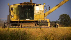 Combine harvesting a field in Italy stock video