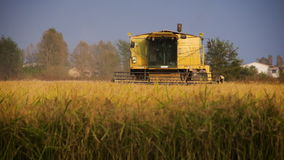 Combine harvesting a field in Italy stock footage