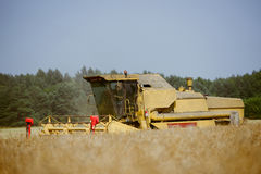 Combine harvesting the field. At summer royalty free stock photos