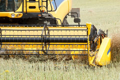 Combine harvesting rape Stock Photos