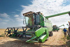 Combine harvesting soybeans Royalty Free Stock Photos