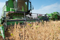 Combine harvesting soybeans Royalty Free Stock Photo