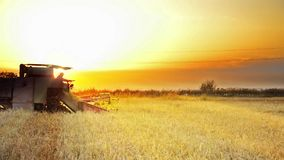 Combine Harvesting at sunset - Stock Video. stock footage
