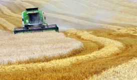 Combine harvesting wheat Stock Image