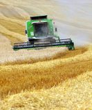 Combine harvesting wheat. Czech Republic Stock Photography