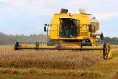 Combine harvesting wheat Stock Image