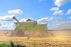 Combine harvesting wheat. In full action Royalty Free Stock Photos