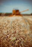Combine harvesting wheat. Extreme shallow DoF Royalty Free Stock Photos