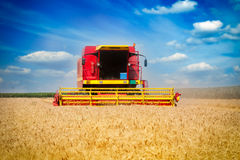 Combine harvesting wheat. On the blue sky Royalty Free Stock Photos
