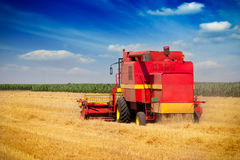 Combine harvesting wheat. On the blue sky Stock Images