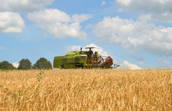 Combine harvesting wheat. A green combine harvesting wheat Stock Photo