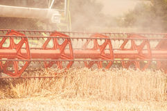 Combine harvesting wheat. Close up of harvested wheat. Combine harvesting wheat Stock Photo